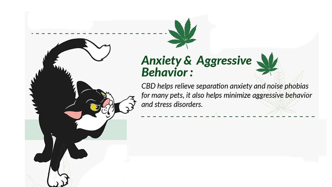 Hemp oil for cats anxiety