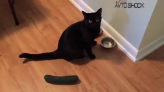 КОТЫ БОЯТСЯ ОГУРЦОВ №1   CATS VS CUCUMBERS JOKE   FUNNY CATS SCARED BY CUCUMBERS 1