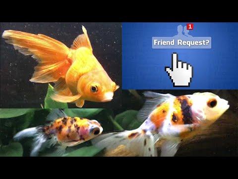 Best Goldfish Tankmates