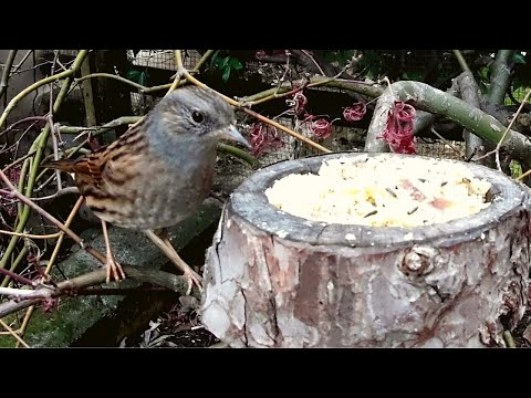 scopaiola,-cinciarella-bird-feeder-!!!