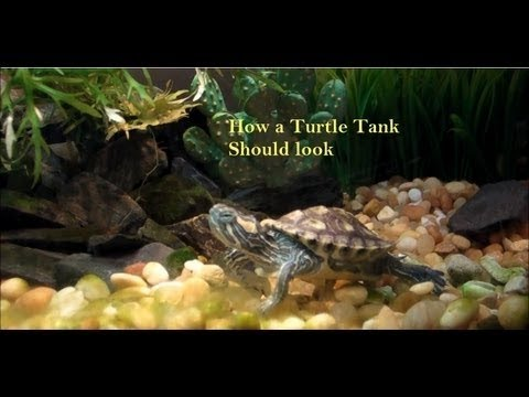 Turtle Tank Setup  Red Ear Slider  (RES)  Live Plants  Fogger LED lights community tank. - YouTube & Turtle Tank Setup