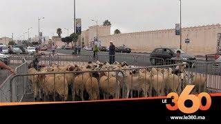 Le360.ma • سائقون مهنيون يوزعون أضاحي العيد على الأسر المعوزة بالقطاع بأكادير