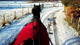 Horse Sleigh Bells Ringing In Snow At Newtonmore