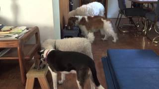 Feeding A Dog Pack - Dogs Waiting To Eat | Follow The Leader Dog Training And Rehabilitation Llc