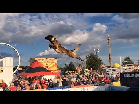 Малинуа-Бельгийская Овчарка-Мастер Прыжков/Belgian Malinois, Amazing Athlete!!!