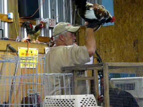 Chicken Auction Millbrook Alabama Every Sat 6;pm