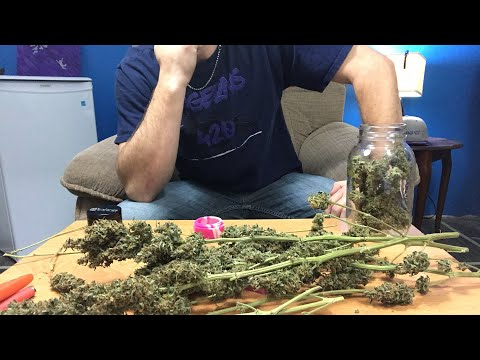 WEDNESDAY NIGHT LIVE SHOW - Taxing Cannabis, more Jeff Sessions S@$T, Curing and Burping