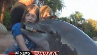 Dolphin Bites Girl at SeaWorld: Caught on Tape - Jillian Thomas Interview on 'GMA'