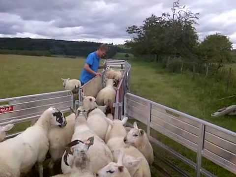 Koyunları Eleme Sistemi