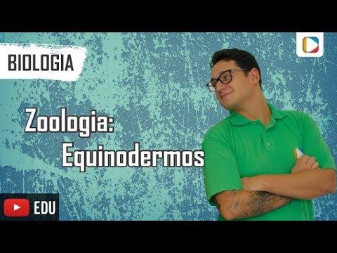 Biologia - Zoologia: Equinodermos