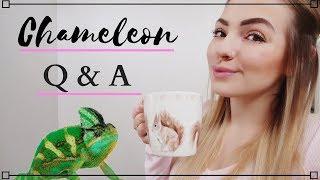 Chameleon Q&A