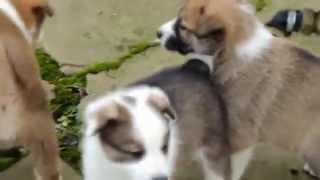 Cute Puppies Compilation\Милые щенки играют