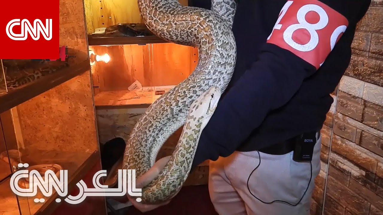 شاب في العراق يهوى تربية أخطر المخلوقات ويؤيهم في منزله  - نشر قبل 3 ساعة
