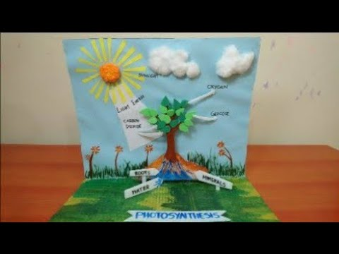 Photosynthesis Model In Plants | Science Project 3D Model For Students | The4Pillars