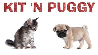 Ariana Grande - Kit 'N Puggy