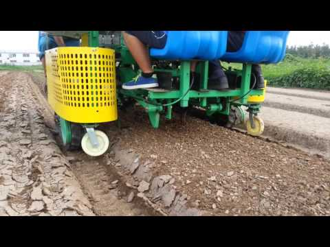 4 lines green onion transplanter