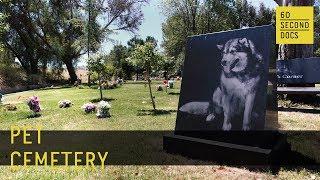 Pet Cemetery   Los Angeles Pet Memorial Park // 60 Second Docs