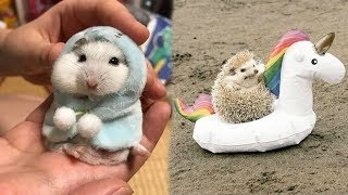 Funny Baby Animals Doing Funny Things 2019
