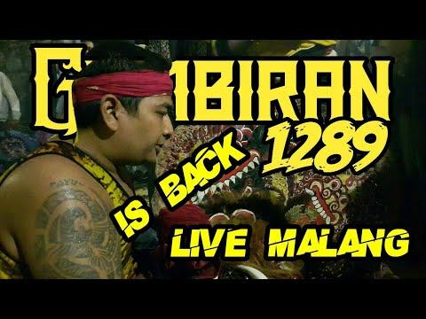 Barongan Rogo Samboyo Putro Feat Turonggo Saputro Wijoyo Live Malang