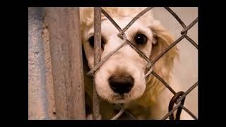 Az állatokkal való bánásmód (Puzsér, Pilu, Pencz, Édelkraut)