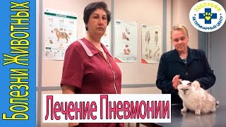 Лечение Пневмонии у Кота.