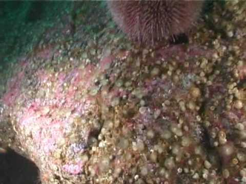 Loch nam Madadh Reef