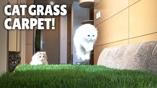 Cat Grass Carpet!! How Will My Cats React?