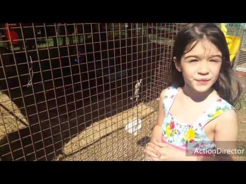Gisele Amistadi nel Zoo viaggianti Italia