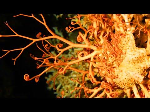 World's Most Alien Coral Reefs (Full Documentary) | TRACKS