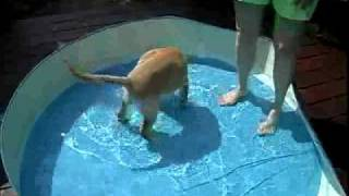 Puppy Porn Series: The Pool