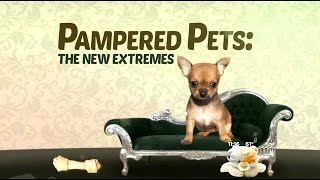 Seen At 11: New Extremes For Pampered Pets