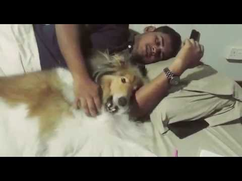 Episode 7 Smooth Collie