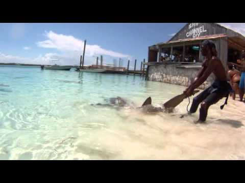 Feeding Wild Sharks in the Bahamas! [HD]
