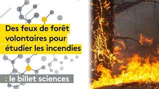 Des scientifiques américains mettent le feu pour étudier les incendies de forêts