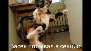 Самые смешные котята с просторов интернета в этой котоматрице / LOLcats