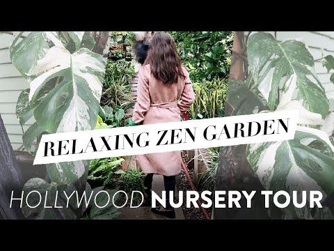 VARIEGATED MONSTERA HUNT AT HOLLYWOOD HOUSEPLANT NURSERY | Mickey Hargitay Plants Tour