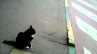 черная, с белым воротничком кошка во дворе, всеобщая любимица