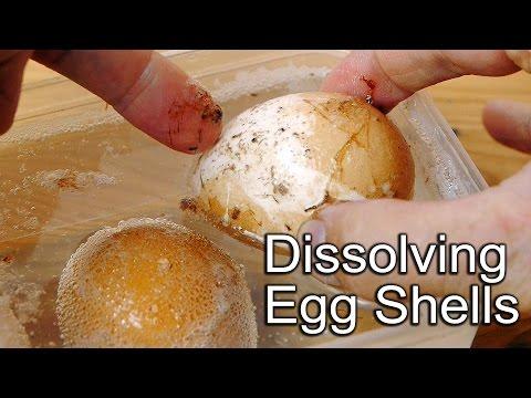 Egg Shell Science Experiment - Dissolves in Vinegar
