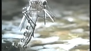 Insectos Mortales - Discovery Channel Video
