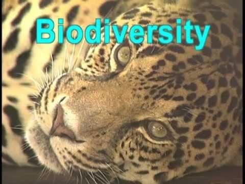 Biodiversity: The Web of Life