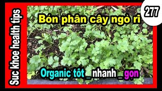 Bón phân sạch Organic RAU NGÒ RÍ, MUA RẺ LÊN TỐT, #277  Miracle grow natural fertilizer , SKHT