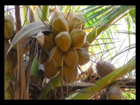 2 साल एक पड़ताल - वाह किसान | Wah Kisan - Success Story - 13 (Spot)