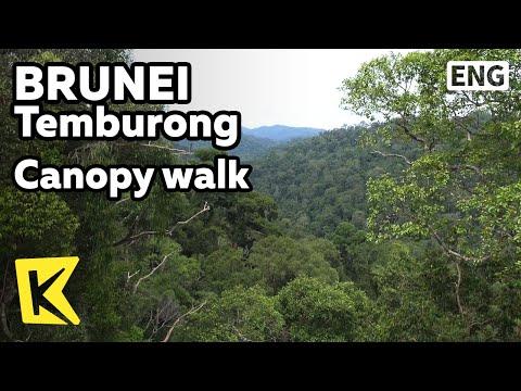 【K】Brunei Travel-Temburong[브루나이 여행-템부롱]롱보트 타고 찾아간 밀림 관망대/Canopy Walk/Longboat