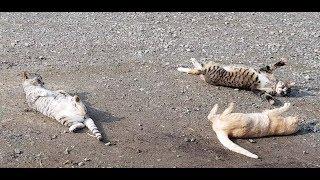 들고양이(cat) 3마리 귀엽게 노는 장면과 나무에 올라가는 장면