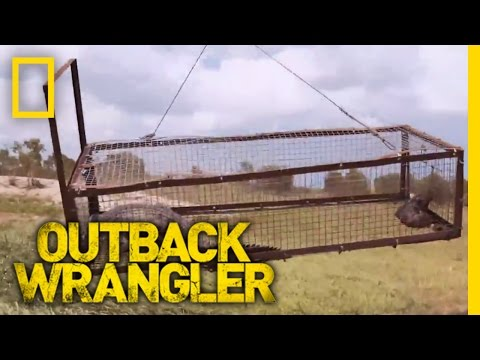 Crocodile Airlift | Outback Wrangler