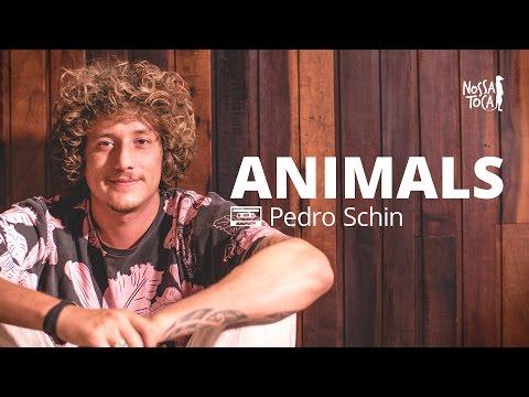 Animals - Maroon 5 Pedro Schin beatbox cover Nossa Toca