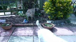 Diesel And Finley Diesel Border Terrier Finley Jack Russell
