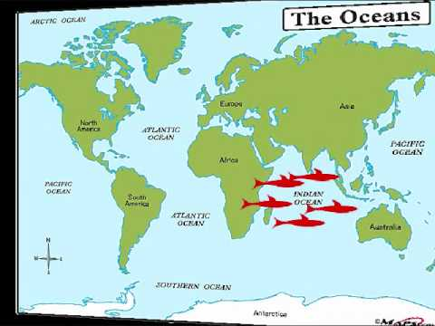 The Five Oceans Song For Kids YouTube - Major oceans of the world map