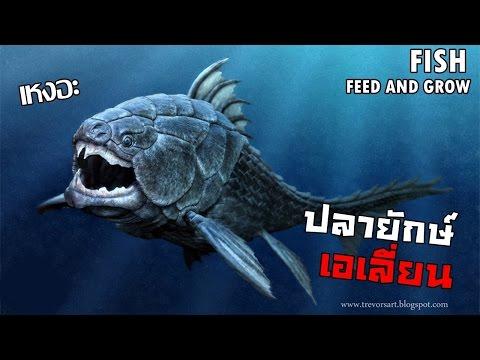 ปลายักษ์ นักแทะแห่งทะเล  | Fish FEED AND GROW #6