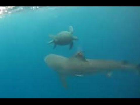 [Wildlife Documenatary] Tortoises and Sea Turtles Documentary - BBC Documentary HD 2016
